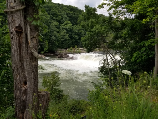 ohiopyle state park things to do see